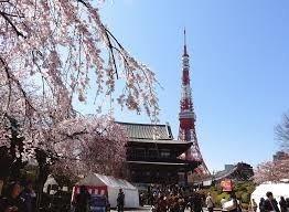 増上寺桜.jpg